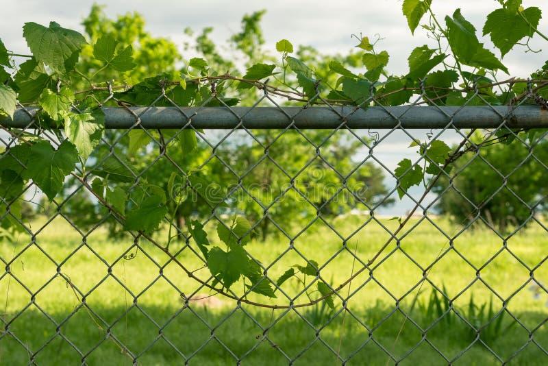 Leaf on Fence royalty free stock image