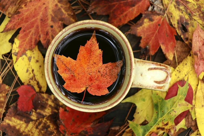 Leaf floating in coffee. A beautiful leaf floating in coffee on a autumn day stock images