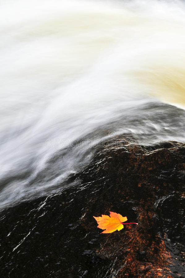 Download Leaf Floating In River Royalty Free Stock Image - Image: 9744436