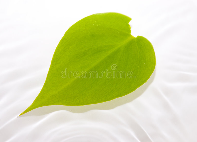 Leaf floating in water stock photography