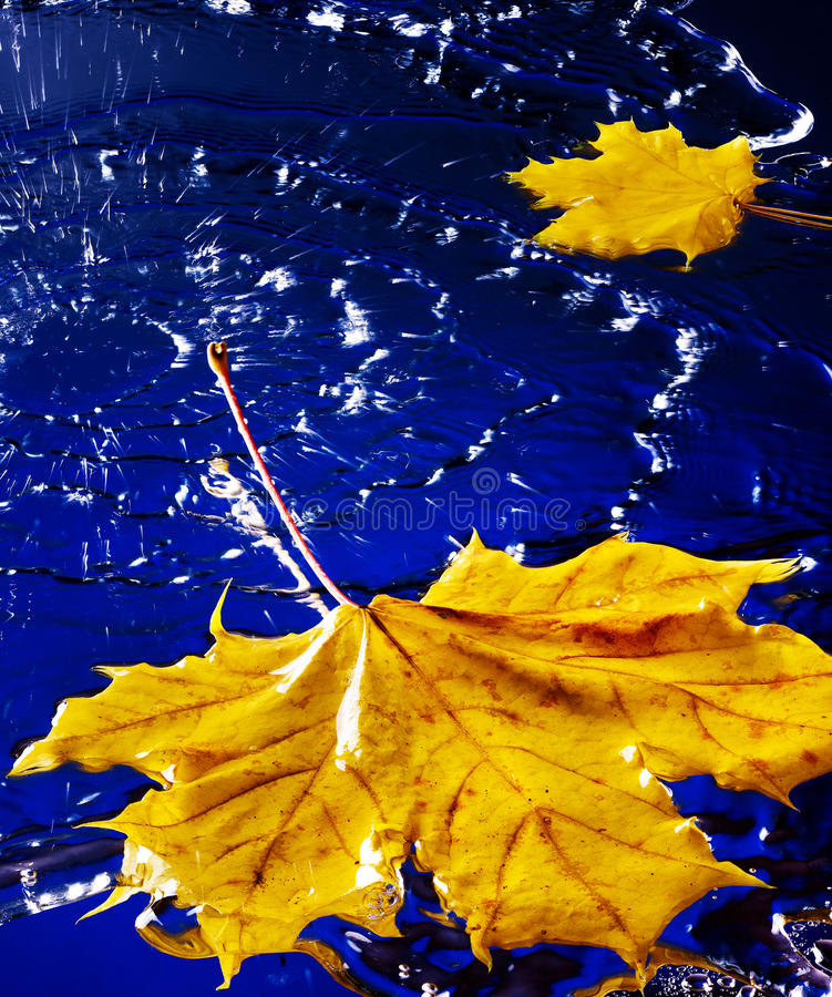 Download Leaf Floating On Water With Rain. Stock Image - Image: 22034889