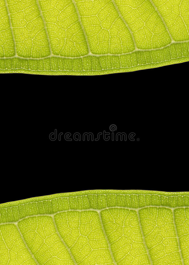 Download Leaf Frame stock image. Image of life, abstract, backdrop - 22186393