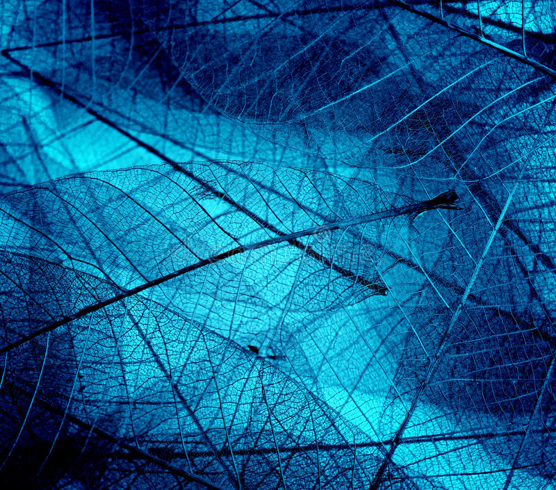 Leaf fresh colors royalty free stock photography
