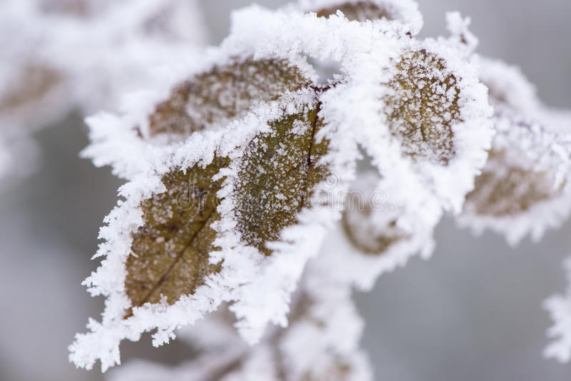 Leaf with frost and ice. Leaves with frost and ice at very cold winter day stock photo