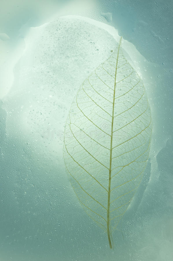 Leaf frozen royalty free stock photography