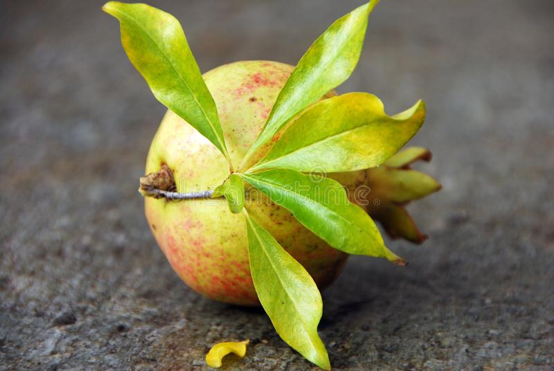 Leaf on fruit on table royalty free stock photography