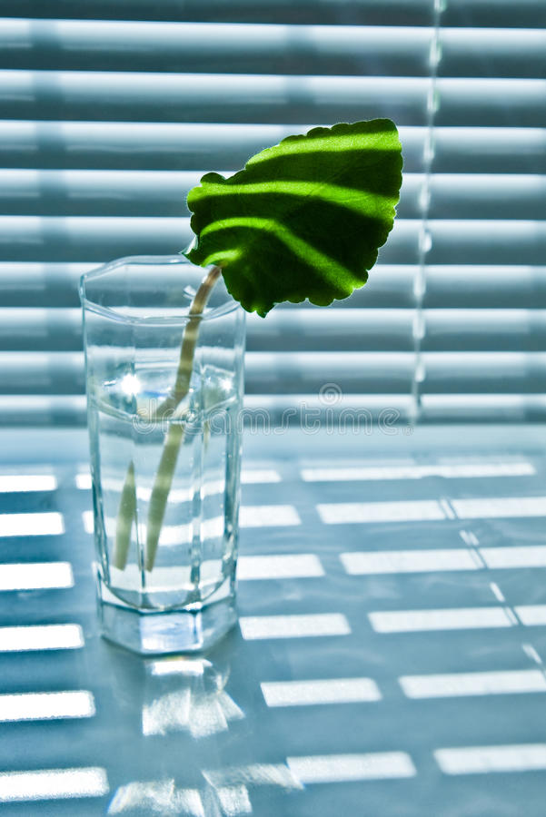 Leaf in glass stock photography