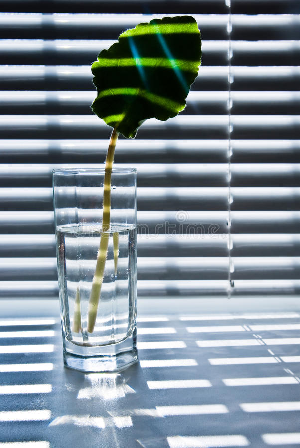 Leaf in glass 2 royalty free stock photos