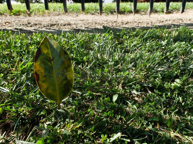 Leaf and grass royalty free stock photos
