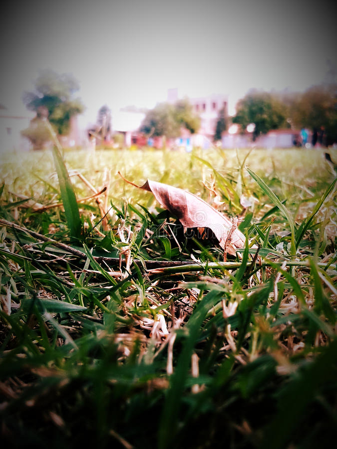 Leaf on the grass stock image