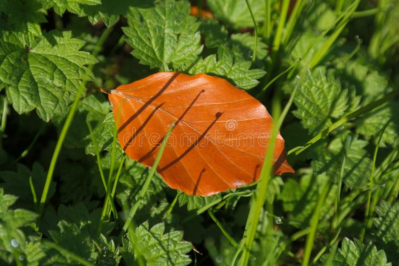 Leaf, Grass, Plant, Vascular Plant royalty free stock image