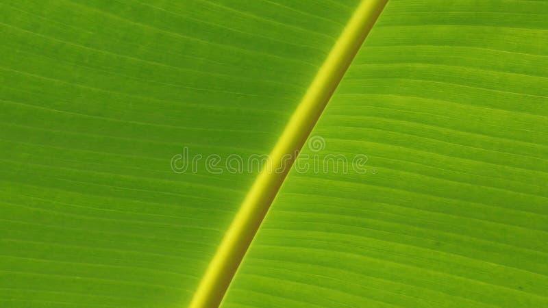 Leaf, Green, Banana Leaf, Plant stock photo