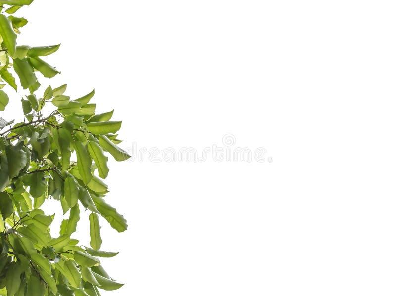 A leaf royalty free stock photos