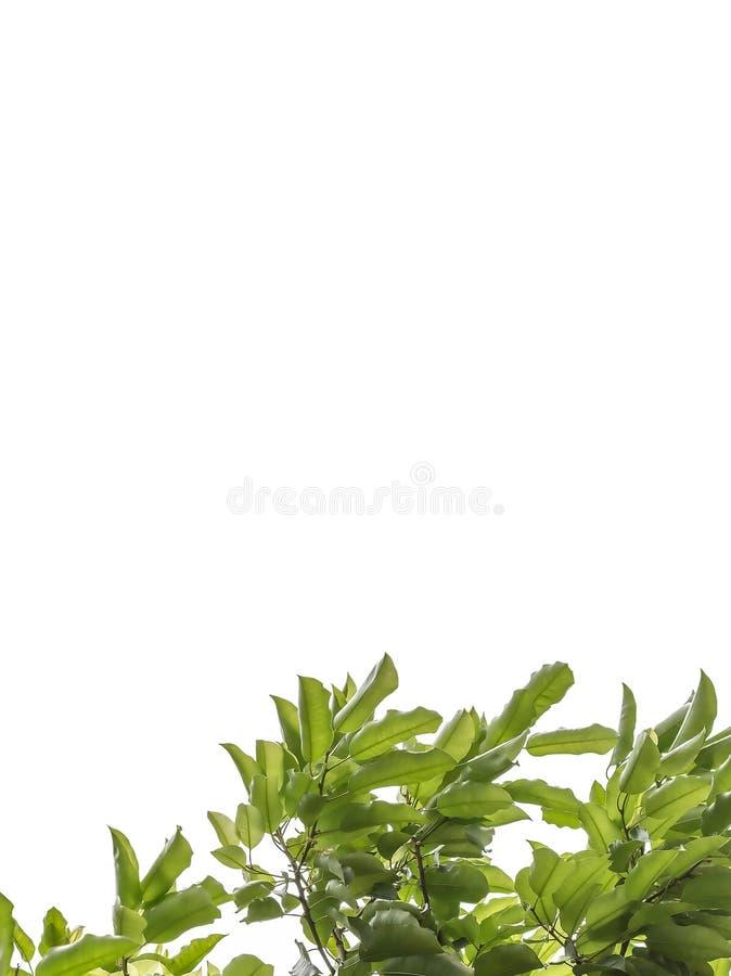 A leaf stock photos