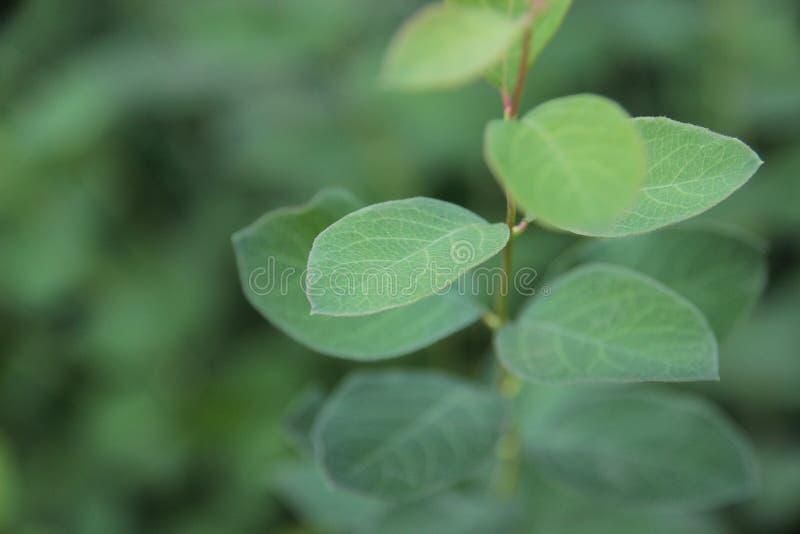Leaf, Green, Plant, Macro Photography royalty free stock photos