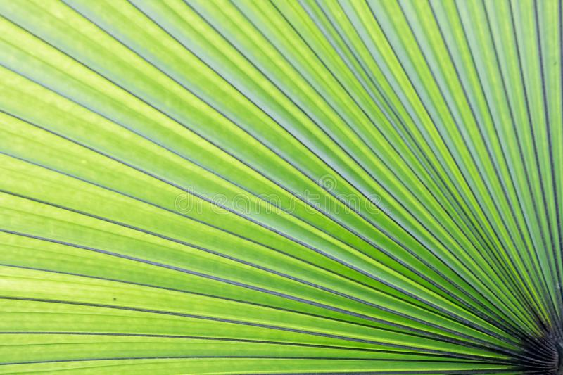 Leaf, Green, Plant, Palm Tree royalty free stock image