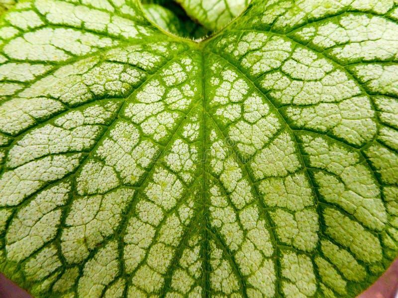 Leaf, Green, Plant, Plant Pathology stock photos