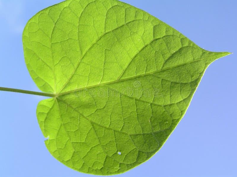 Leaf, Green, Plant, Plant Stem stock image