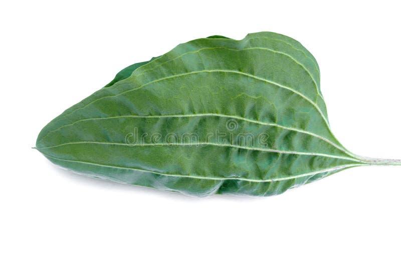 Leaf. royalty free stock image