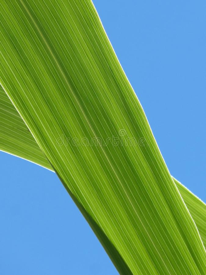 Leaf, Green, Sky, Plant royalty free stock images