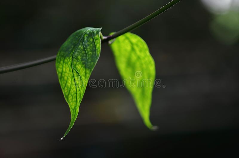 Leaf, Green, Water, Close Up royalty free stock photos