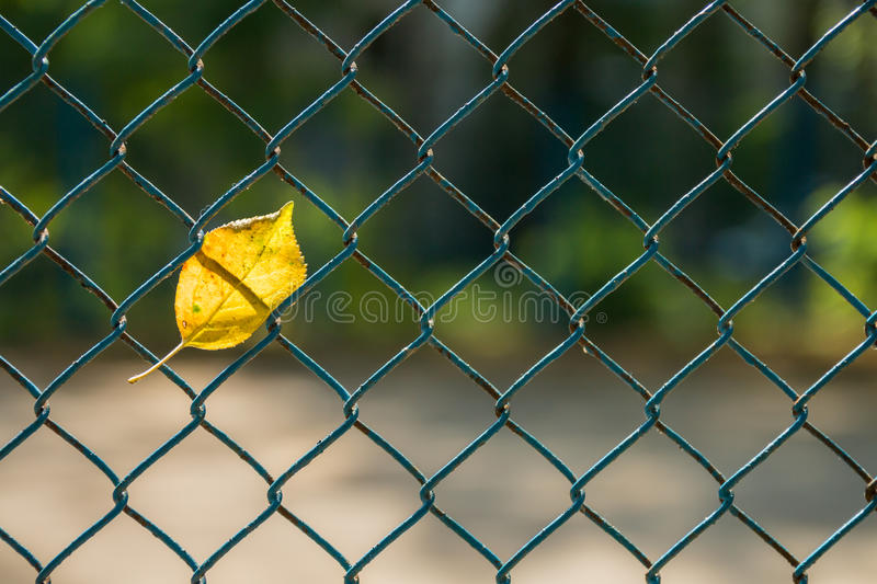Leaf in the grid fence royalty free stock photo