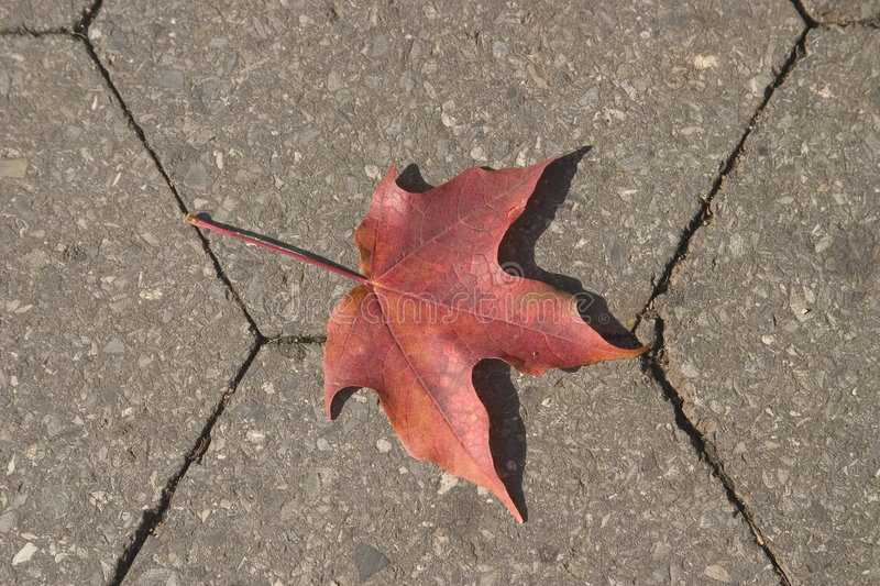 Download Leaf on the ground stock image. Image of leaves, foliage - 170917