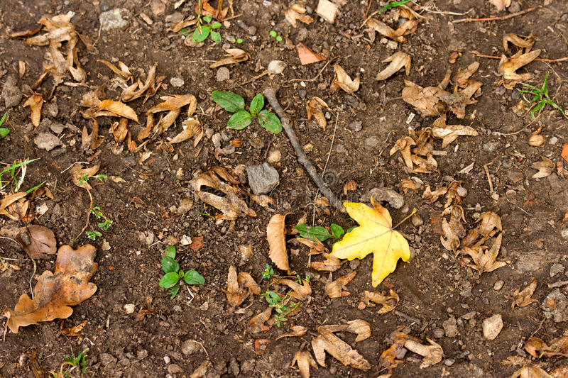 Download Leaf on the ground stock photo. Image of leaf, autumn - 27778240