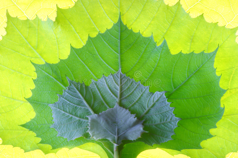 Leaf growth design stock photography