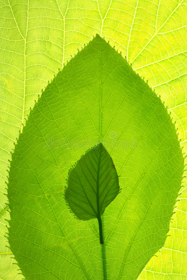 Leaf growth patterned design royalty free stock image