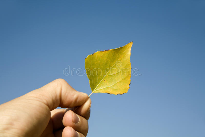 Leaf and the hand of man