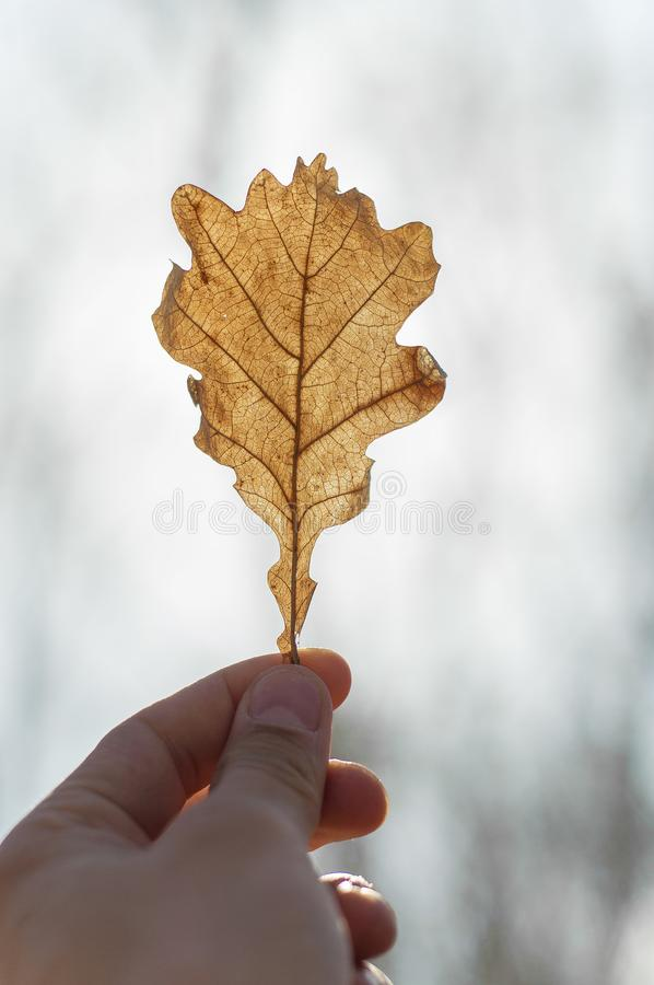 Leaf in the hands stock images