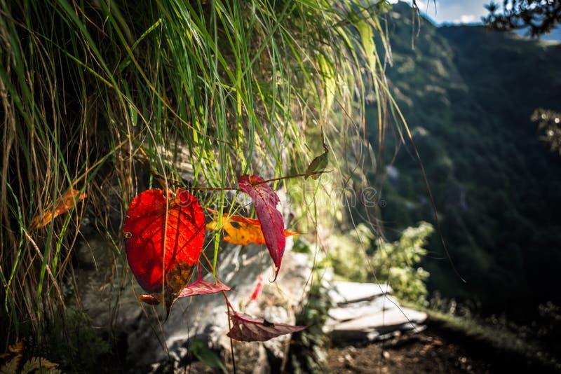 Leaf in Himachal Pradesh, India stock images