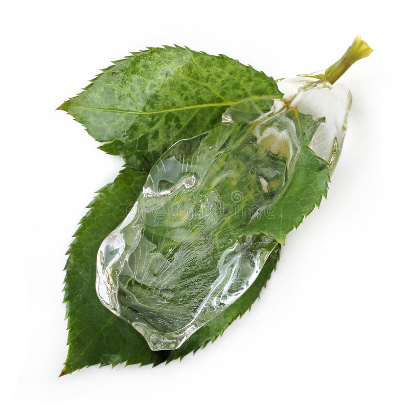 Download Leaf in ice stock photo. Image of clear, tree, freeze - 22003654