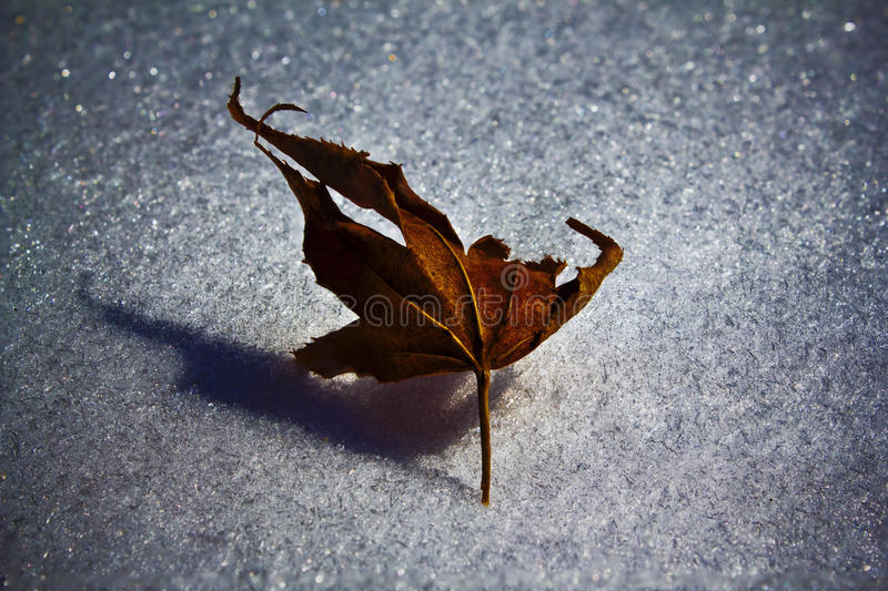 Leaf on Ice royalty free stock images