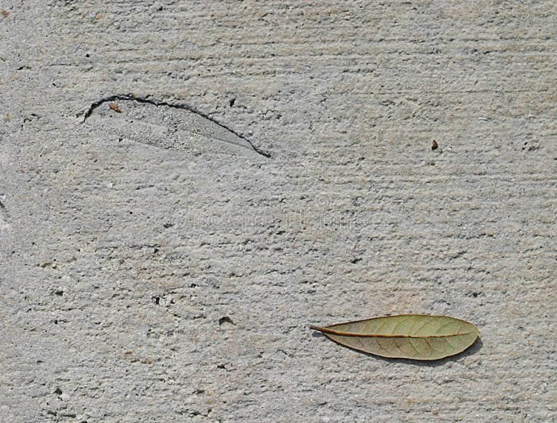 Download Leaf and Imprint stock photo. Image of concrete, comparison - 44678