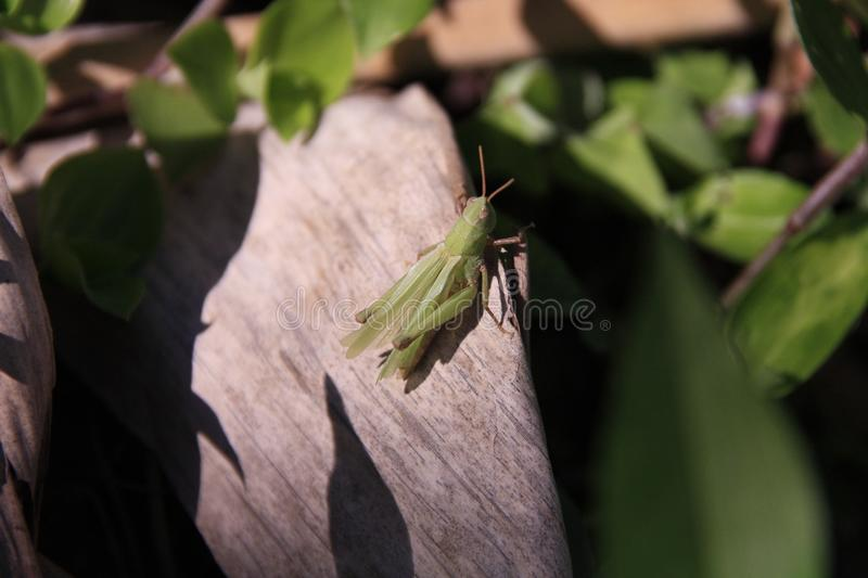 Leaf, Insect, Flora, Plant Stem royalty free stock photo