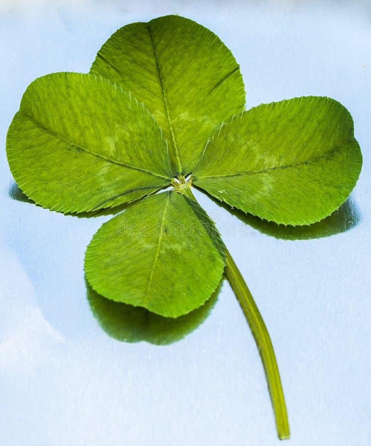 4-Leaf koniczyna na metalu obraz stock
