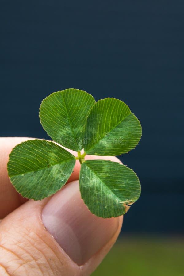 4-leaf koniczyna w palcach z błękita i zieleni tłem obrazy stock