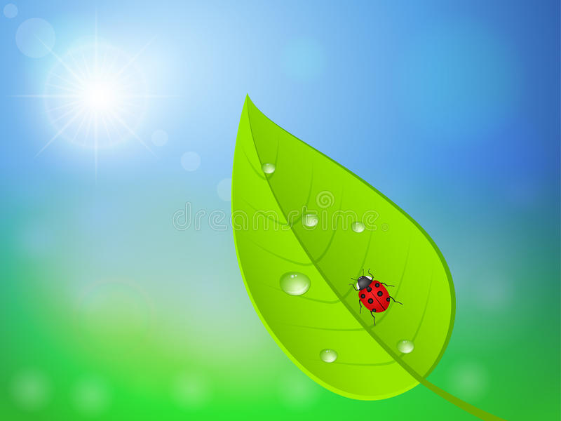 Download Leaf and ladybird stock vector. Image of beautiful, outdoor - 25727437