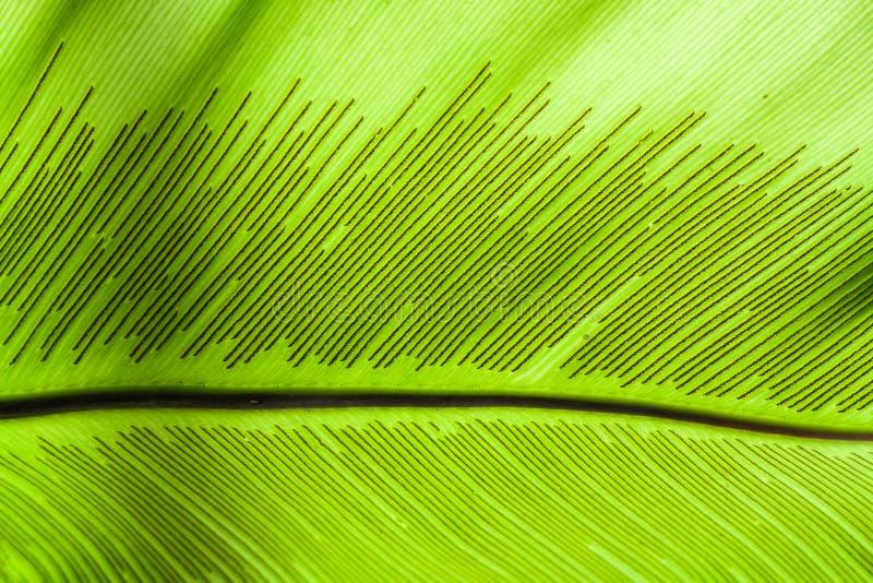 Download Large Leaf stock image. Image of green, laminar, pinnate - 33044757