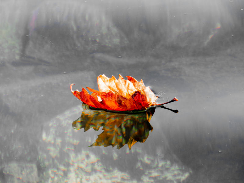 A leaf left to go in the waters of Lake Bolsena Viterbo Italy. A leaf left to go in the waters of Lake Bolsena Viterbo stock image