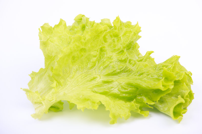 Leaf of lettuce royalty free stock photography