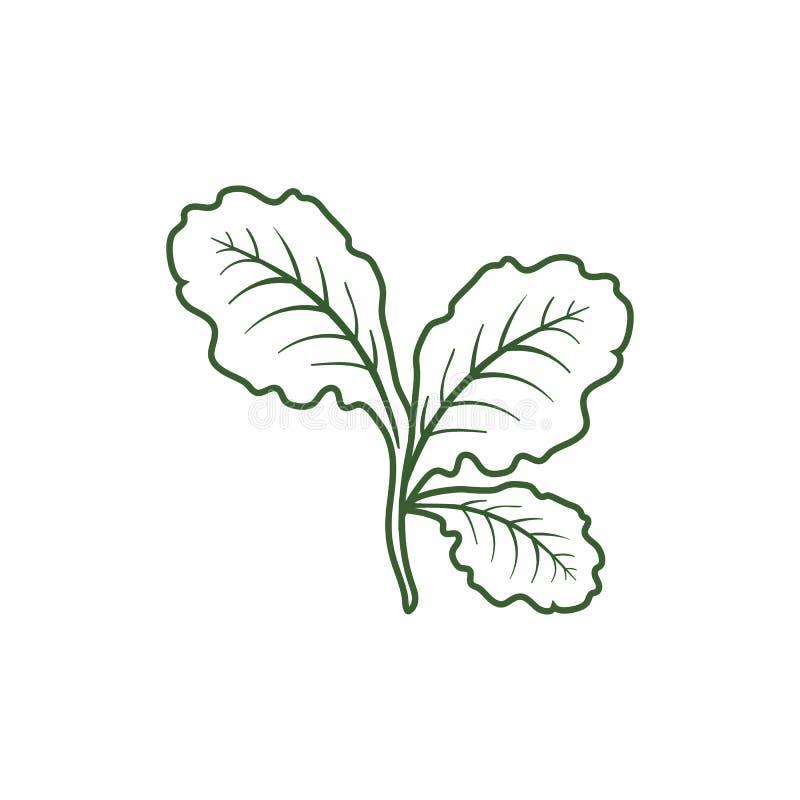 Leaf lettuce icon vector illustration