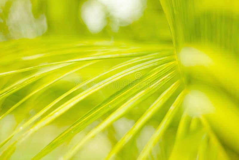 Leaf&light images stock
