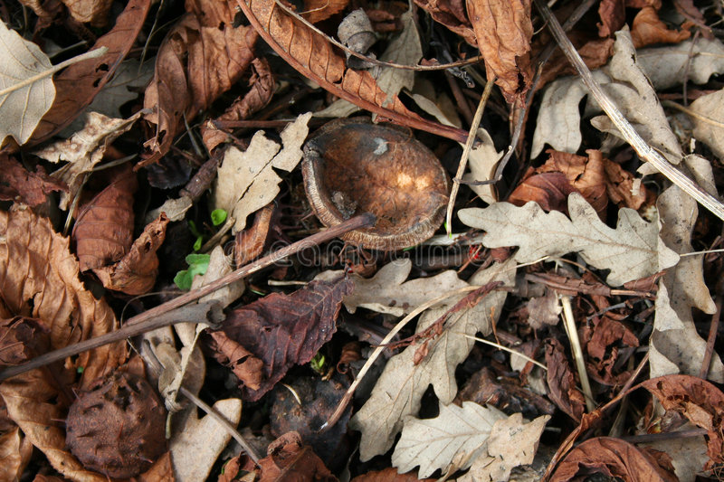 Download Leaf Litter, With New Growth Showing Through Stock Photo - Image: 654856