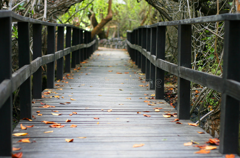 Leaf littered walkway. An image of an overgrown bridge reclaimed by nature stock image