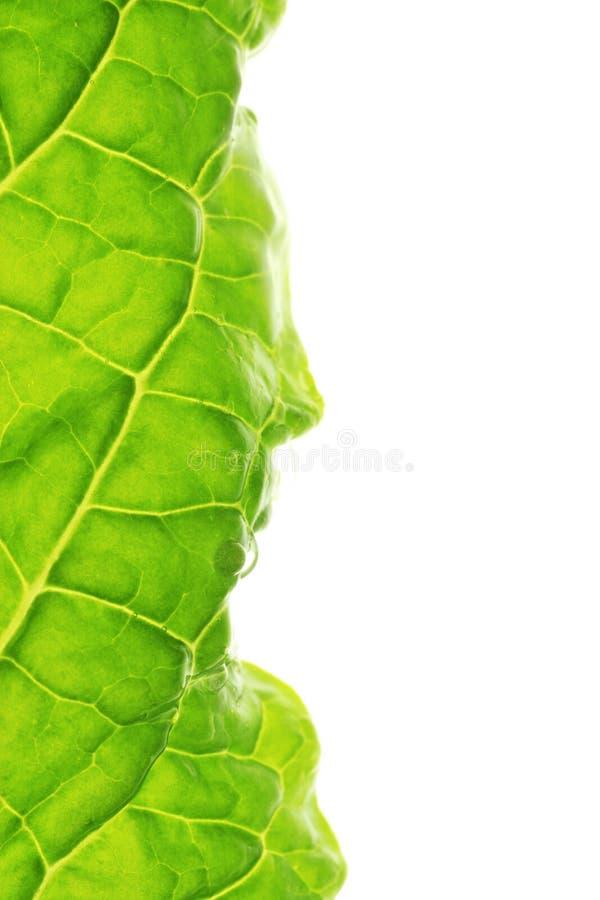 Download Leaf macro border stock photo. Image of leaf, organic - 2717436