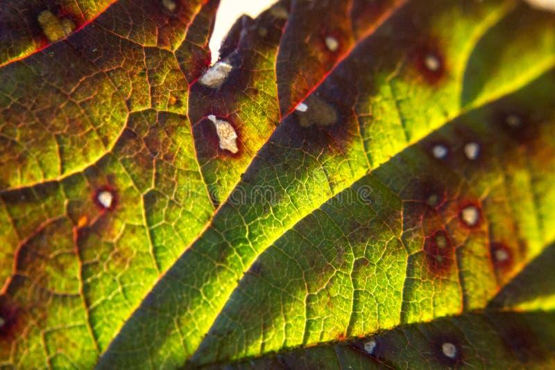 Leaf macro stock image