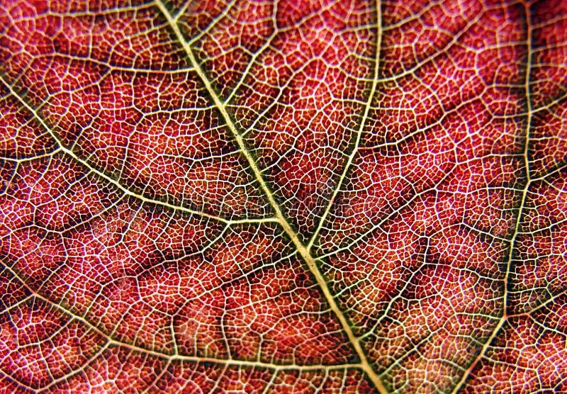Leaf. Macro of a leaf like human synapse stock image
